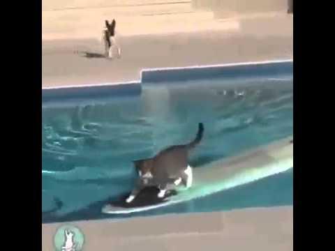 Snop cat