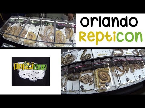 Buying 3 Ball Pythons @ the Orlando Repticon 2017 Exotic Pets FULL SHOW