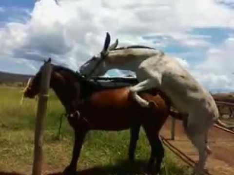 cobertura egua MM