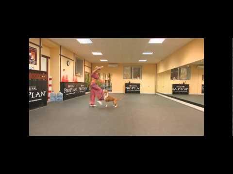 Pitbull Dançarina Dancing Pit Bull