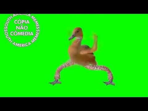 Vídeo de zap 1 A mamãe pata funkeira