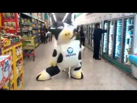 Vaca dançarina