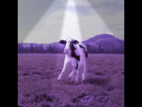 Vaca Dançarina 0